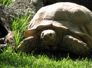 Tortoise in Portugal Zoo