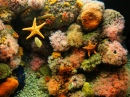 Monterey Bay Aquarium, California, USA