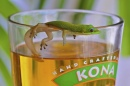 Gecko and a Beer