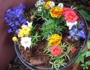 Freshly Potted Annuals