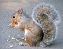 Squirrel - Holborn, London, England