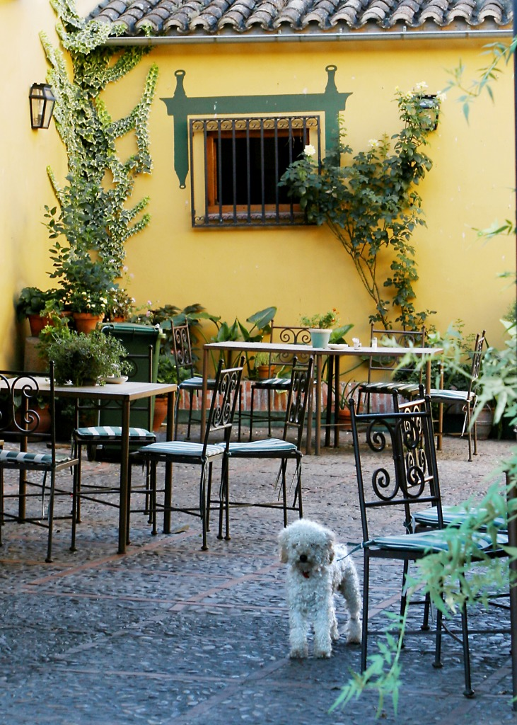 Oropesa Spain  city images : ... features keywords dog perro poodle oropesa spain cafe restaurant share