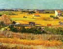 Harvest at La Crau