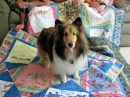 Bailey Likes Quilts