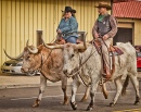 Longhorn Steer Riders
