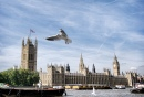 Seagull over Westminster