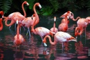 Flamingos Jungle Garden