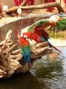 Macaw in Wildlife World Zoo