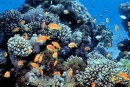 Gulf of Eilat, Red Sea, Coral Reefs