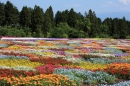 Japanese Flower Carpet