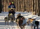 Sled Dog Race in Anchorage, Alaska