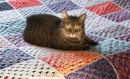 Kitty on the Crochet Blanket