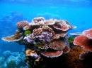 Corals on Flynn Reef