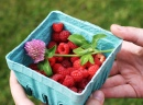 Raspberries and Clover