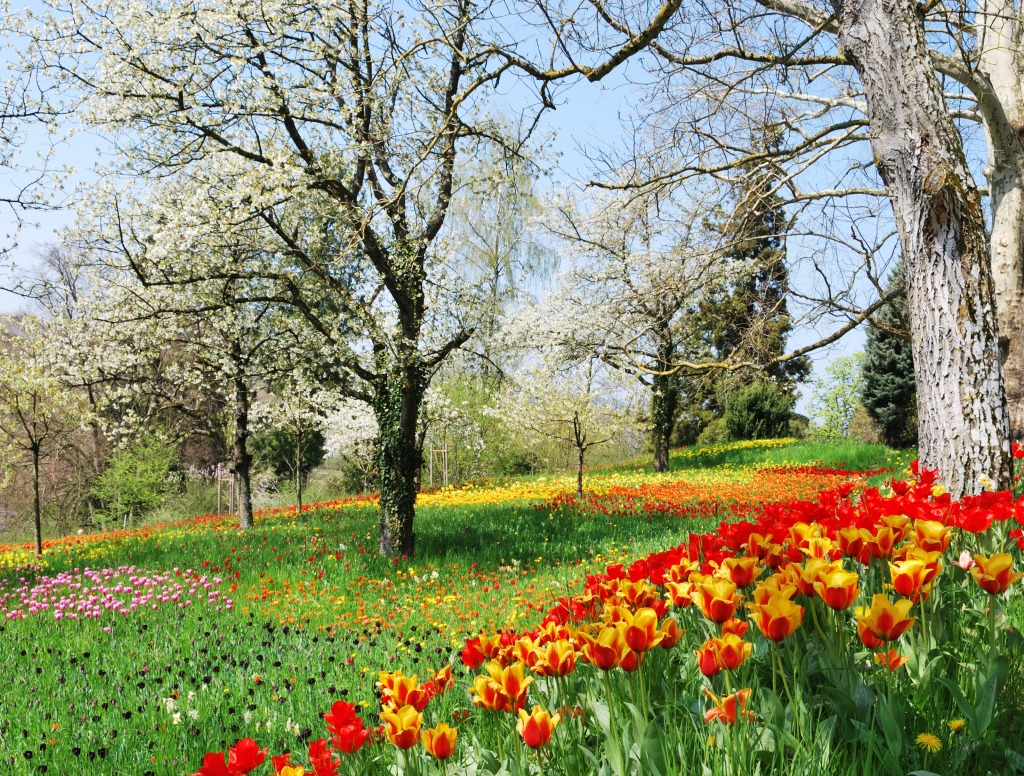 Tulip season jigsaw puzzle in flowers puzzles on for What season are tulips