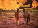 Horses inside Navajo Tribal Park, Monument Valley