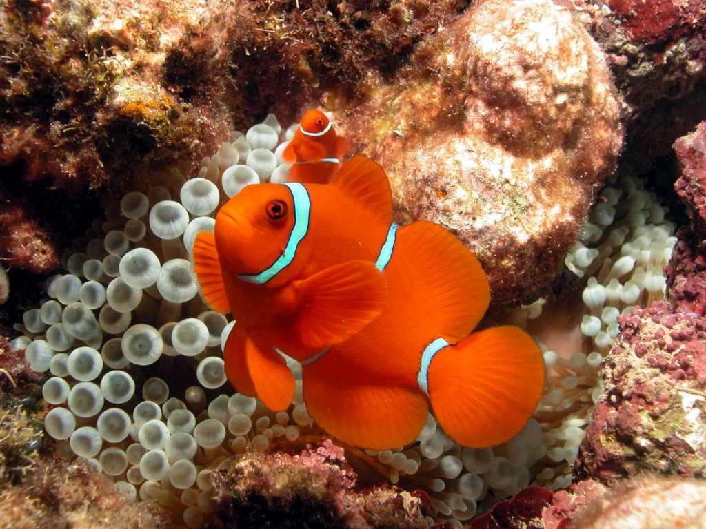 Colorful Coral Reef Fish Crossword