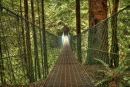 Juan de Fuca Trail: Suspension Bridge