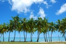 Palm Trees, Cook Islands