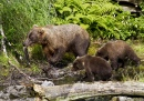 Bear Sow with Salmon and Cubs