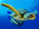 Green Turtle, Tenerife, Canary Islands