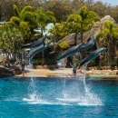 Sea World Show, Surfers Paradise, Australia
