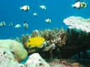 Diving near Similan Islands, Thailand