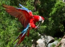Macaw at the Cincinnati Zoo