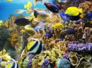 Angelfish and Tropical Corals