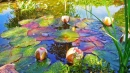 Colorful Lillypads in the Pond