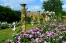 Rose Gardens at Hever Castle, England