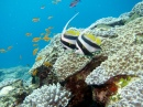 Scuba Diving in New Caledonia