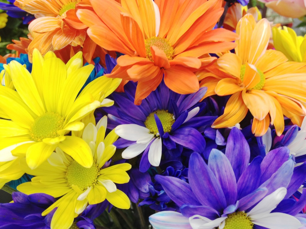 Colorful Flowers Jigsaw Puzzle In Puzzle Of The Day