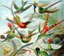 Hummingbirds from the
