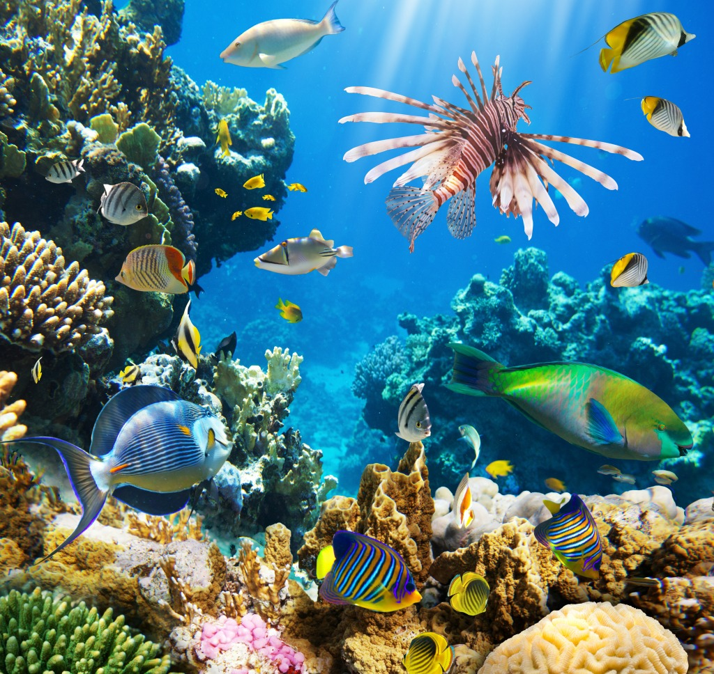 Tropical Fish On A Coral Reef Jigsaw Puzzle In Under The
