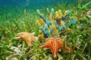 Underwater Life with Sponges and Starfish