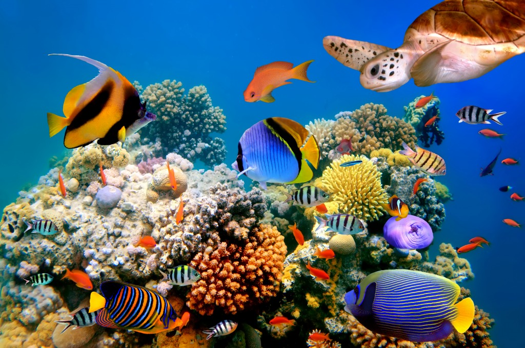 Tropical fish and turtle on a coral reef jigsaw puzzle in for Reef tropical fish