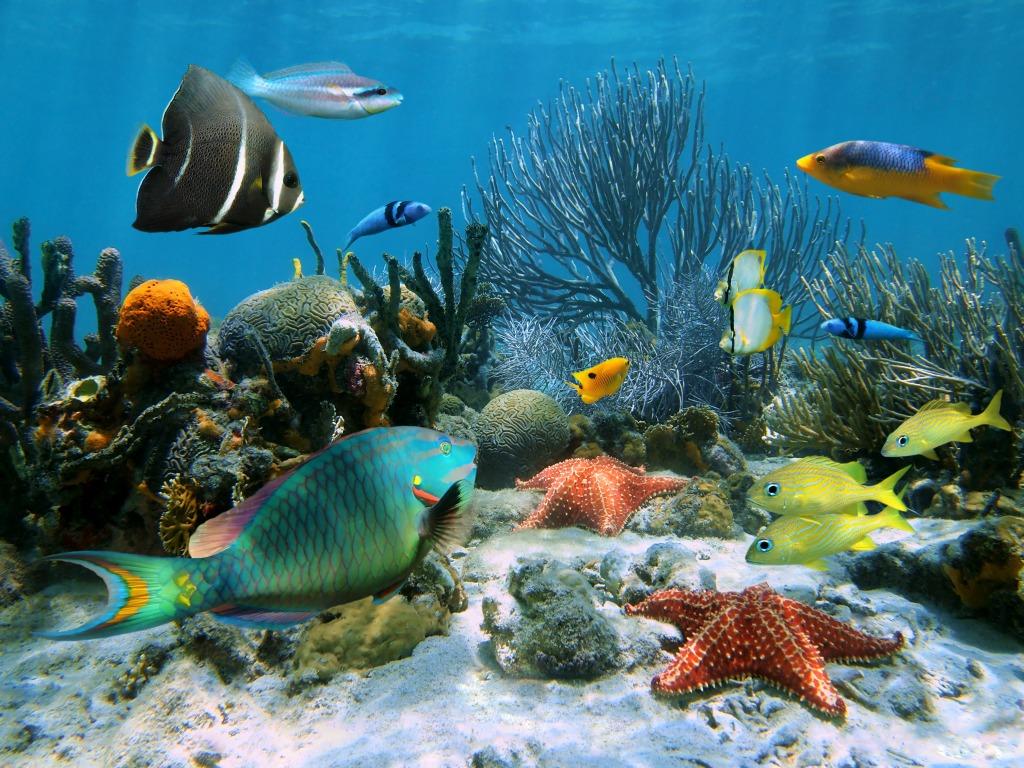 Caribbean Sea Animal Life: Coral Garden, Caribbean Sea Jigsaw Puzzle In Under The Sea