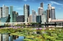 Lotus Flowers and Singapore skyline