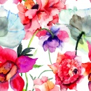 Peony Flowers Watercolor