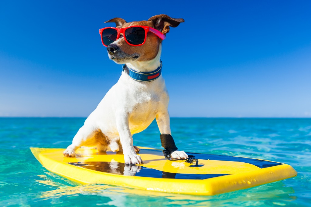 Surfer Dog jigsaw puzzle in Animals puzzles on ...