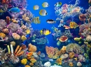 Colorful Aquarium