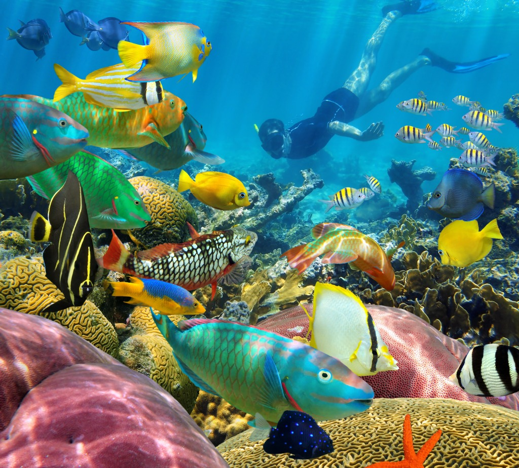 Coral reef with tropical fish jigsaw puzzle in under the for Reef aquarium fish