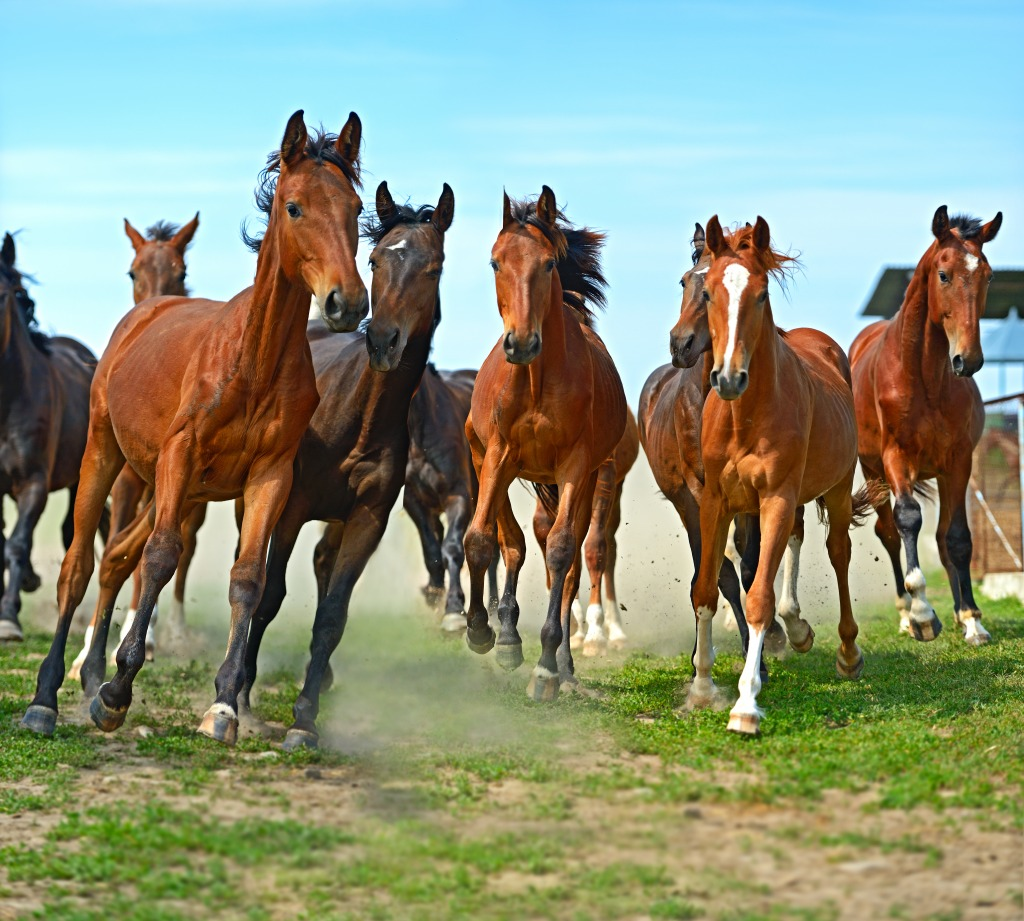 herd of hurrying horse jigsaw puzzle in animals puzzles on running horse clip art sketch running horses clip art colors