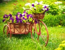 Old Bicycle with Basket of Flowers