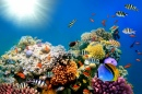 Bright Colors of the Coral Reef