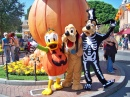 Donald, Pluto and Goofy