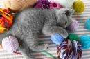Gray Kitten, Colorful Yarn