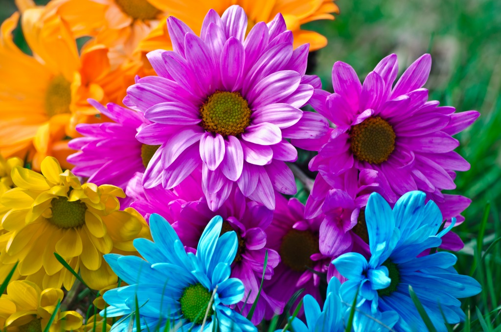 Bright Flowers jigsaw puzzle in Puzzle of the Day puzzles on ... Flowers