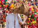 Camel and His Owner, Pushkar, India